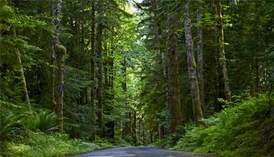 presidente de Estados Unidos, Franklin Pierce, envía oferta al jefe Seattle, de la tribu Suwamish